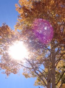 photo of sunlight through aspens (c) Katy Manck